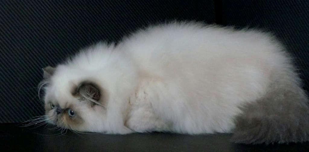 Welcome - Elite Kitten